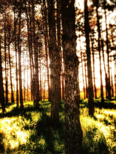 Hugging A Tree Nature Landscape EyeEm Nature Lover Trees Light And Shadow EyeEm Trees Sunshine Silhouette Jagodina