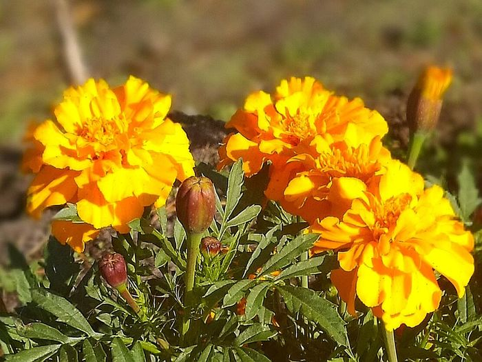 Flowers Autumn
