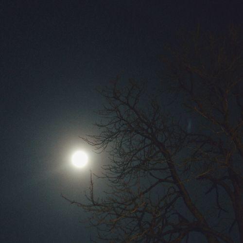 Moonlight IPS2015Light