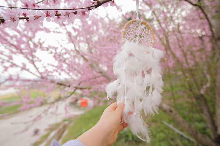 Low section of person holding cherry blossoms in spring