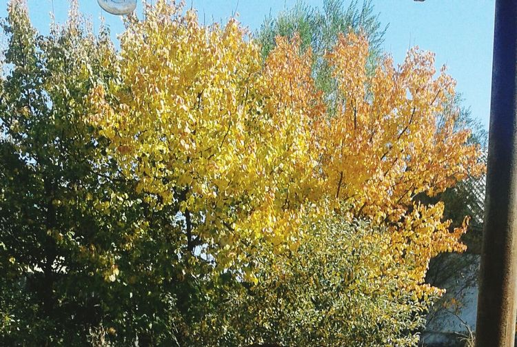 Autumn Yellow Beautiful Yeeeea