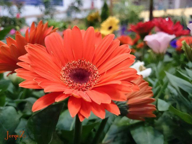 Nature Xperia Z2 Flowers Makro Flower