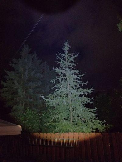 night Beauty In