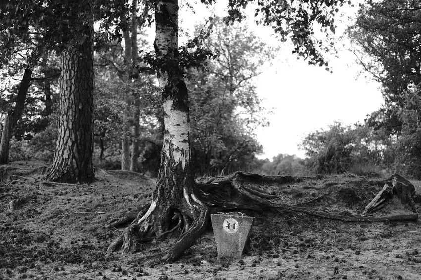 """""""Roots of life"""" Roots Roots Of Tree #blackandwhite #Blackandwhitephotography Blackandwhitephotography Black And White Black And White Photography EyeEm Best Shots - Black + White Nature Photography Nature_collection Nature EyeEm Nature Lover EyeEm Best Shots - Nature Tree Forest WoodLand Sky Landscape"""
