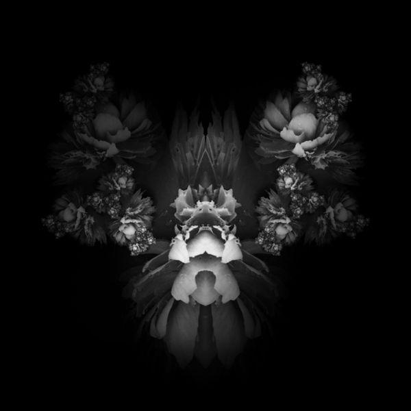 NEM Black&white Monochrome OpenEditCreativ Bw_collection
