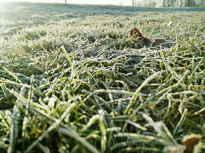 Nature Tranquility Outdoors No People Growth Close-up Field Day Beauty In Nature Nature London East London Ice Freeze Green Grass