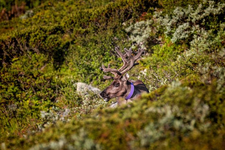 Deer on green field