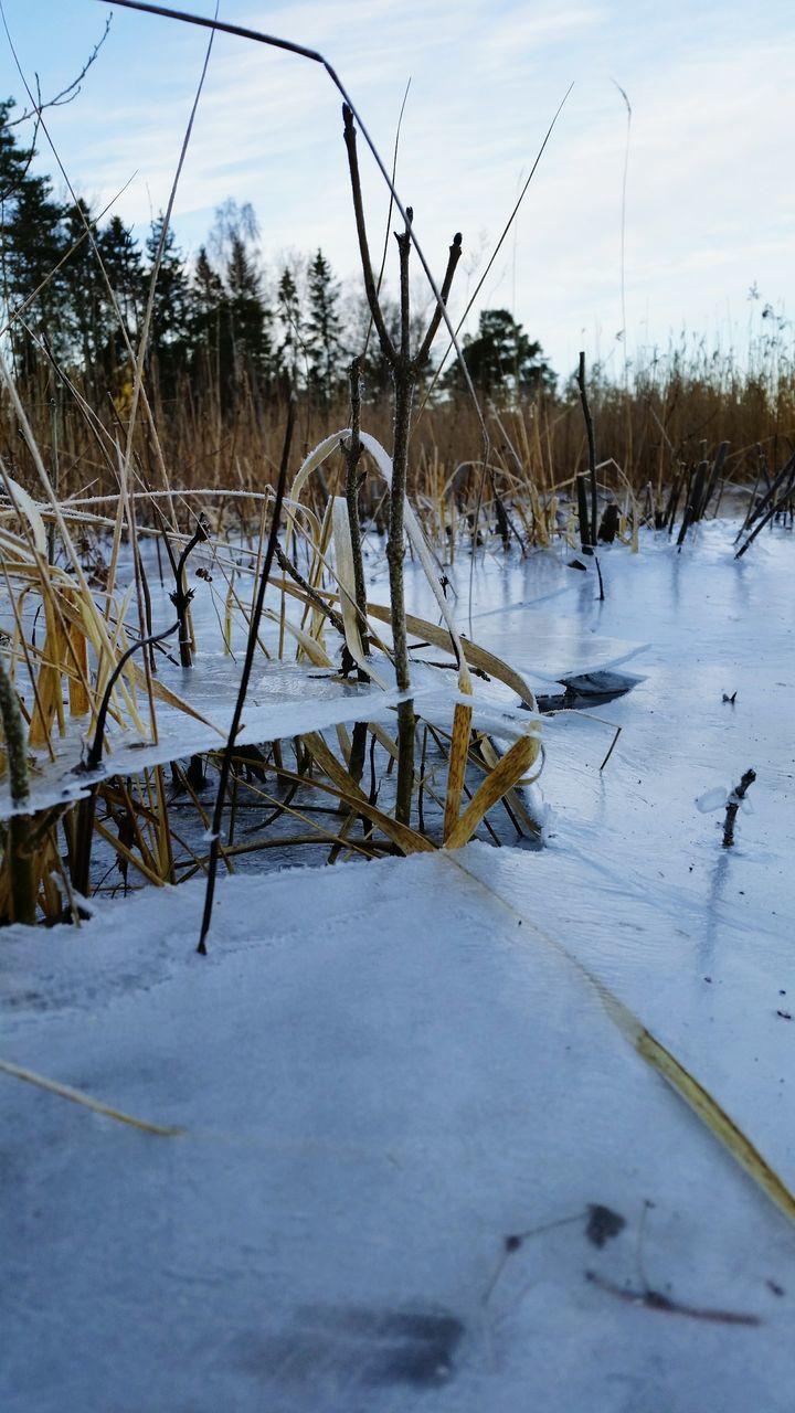 Close-Up Of Grass At Frozen Lake