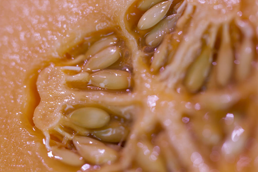 Seeds Cantaloup Close-up Day Food Food And Drink Freshness Healthy Eating Indoors  Melon Melon Seeds No People