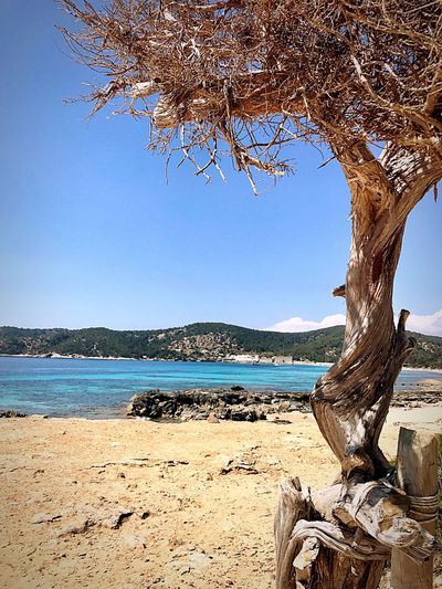 Arbol en la playa Tree Nature Rami árbol Branch Water Beach Tranquility Beauty In Nature Sea Tree Trunk SPAIN Ses Salines No People Clear Sky EyeEm Best Shots EyeEm Nature Lover EyeEm Gallery EyeEm Day Blue Scenics Outdoors Sky Bare Tree The Great Outdoors - 2017 EyeEm Awards
