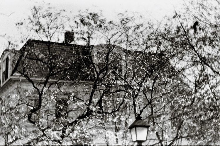Outdoor Photography No People Alexandria, VA Urban Exploration Mansard Roof Low Angle View Leaves_collection Tree Rooftop B&w B&W_collection