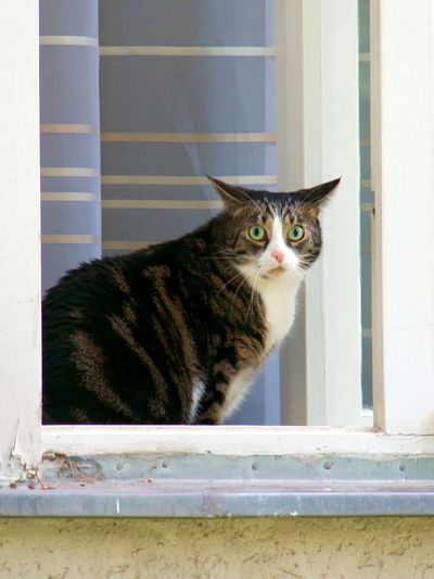 Animal Themes Cat Close-up Day Domestic Animals Domestic Cat Feline Mammal No People One Animal Pets Portrait Watching At You Window