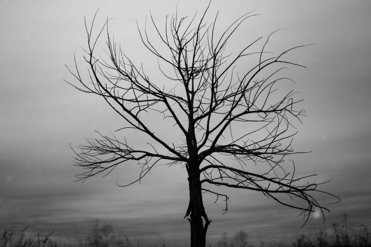 Silhouette bare tree against sky at dusk
