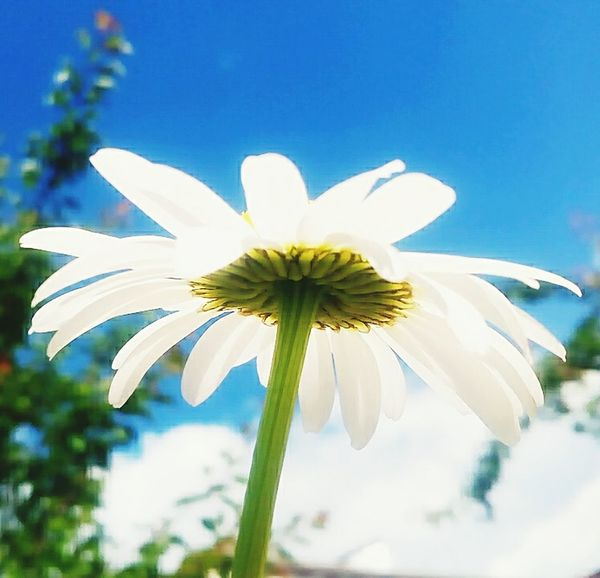 Summer. First Eyeem Photo