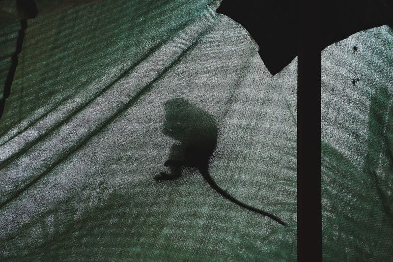 High angle view of shadow on plant