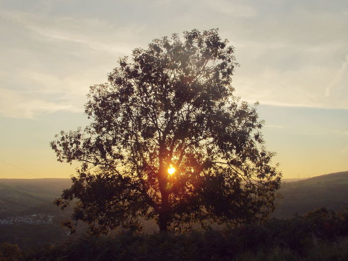 Sunset Through