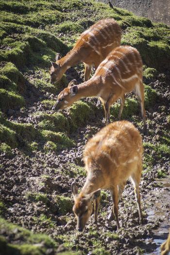 Animals Conservation Deer Endangered Species Multiple Animals Outdoors Zoo