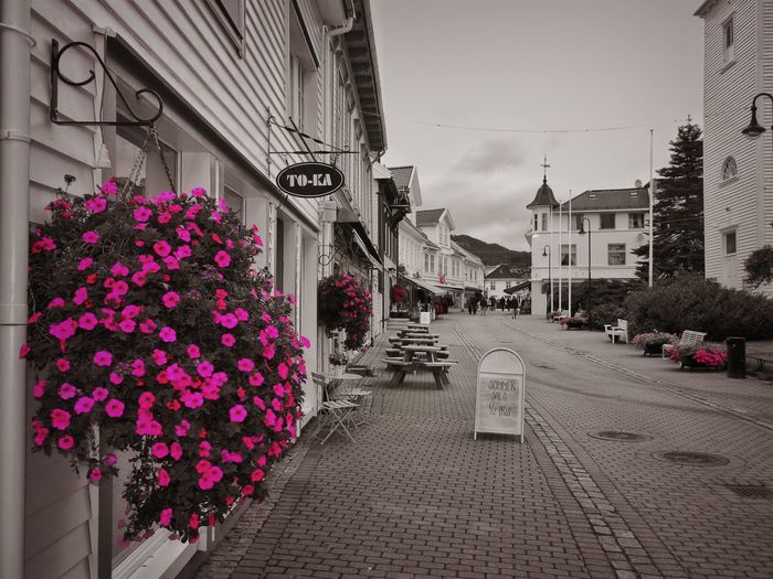 Black And Pink Norway Architecture Beauty In Nature Building Building Exterior Built Structure City Day Flower Flower Pot Flowering Plant Fragility Freshness Growth Nature No People Outdoors Pink Color Plant Purple Residential District Sky Street Vulnerability