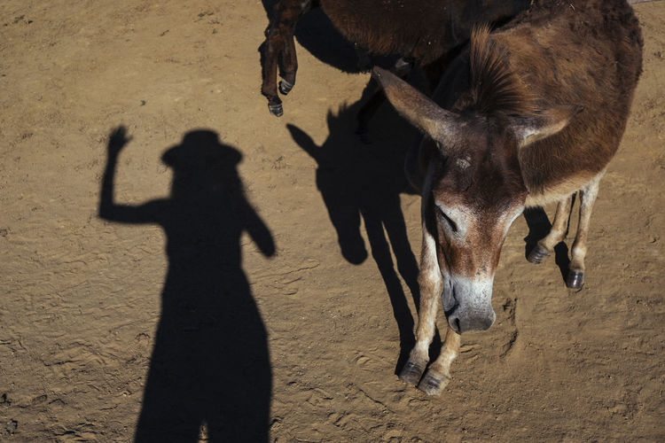 Mammal Domestic Animals Shadow Sunlight Nature Land Livestock Domestic Vertebrate Pets Group Of Animals Animal Wildlife Standing People Day Field Real People Outdoors Herbivorous Focus On Shadow My Best Photo