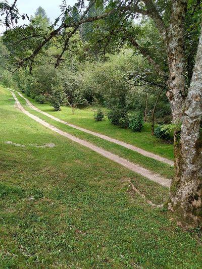 paesaggio Rural