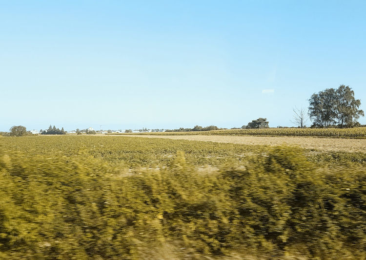 #15803 Agriculture Beauty In Nature Clear Sky Field Land Landscape Nature Rural Scene Scenics - Nature Sky Sunlight Train Trips Tranquil Scene Tranquility View From Train View From Train Window
