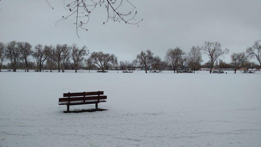 springtime snow in the park Taking Photos