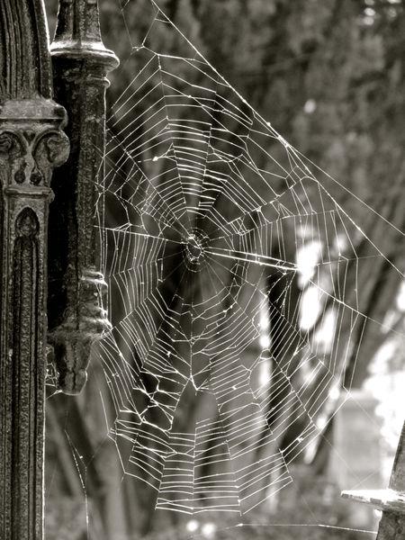 Blanco Y Negro Close-up Dark Dark Wave Fragility Gothic Gotico Nature No People Oscuridad Ragnatela Siniestro Spider Web Spinnennetz Teia De Aranha Telaraña Toile D'araignee Zoology паутина العربية 中文 日本語