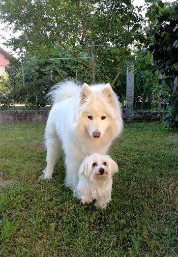 Dog Pets