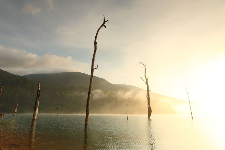 Beautiful landscape with fog and dead trees on a water dam in the morning light of Thailand Tranquility Tranquil Scene Sky Water Beauty In Nature Scenics - Nature Mountain Cloud - Sky Nature No People Non-urban Scene Reflection Silhouette Idyllic Plant Waterfront Tree Outdoors Environment Fog