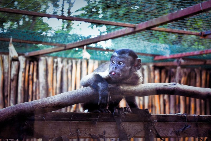 Low angle view of monkey in cage at zoo