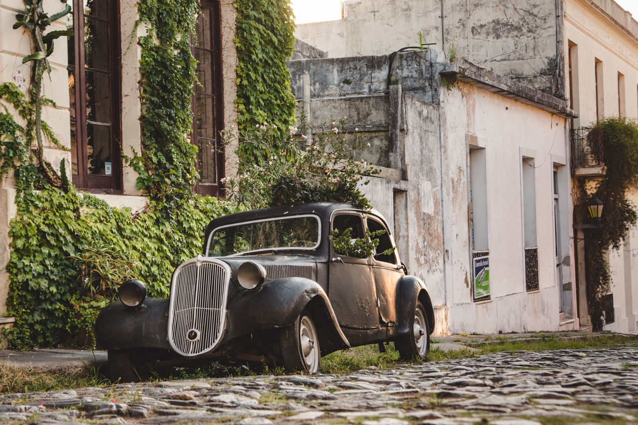 architecture, built structure, transportation, building exterior, land vehicle, abandoned, mode of transport, day, outdoors, history, stationary, damaged, tree, no people, horse cart, animal themes, domestic animals, mammal