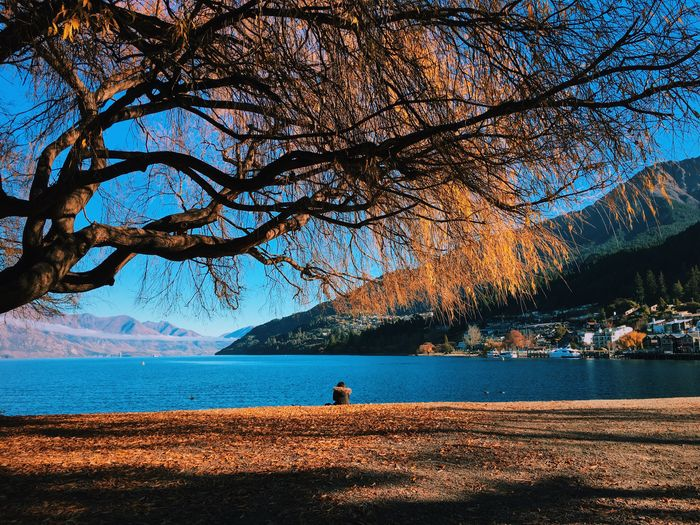 Tree At Lake Against Sky