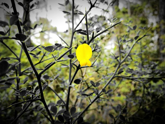 Yellow Branch Flower Flower Head Close-up Outdoors Fragility Nature Tree No People Freshness Beauty In Nature Day EyeEmNewHere EyeEm Gallery EyeEm Nature Lover Focus On Foreground Springtime