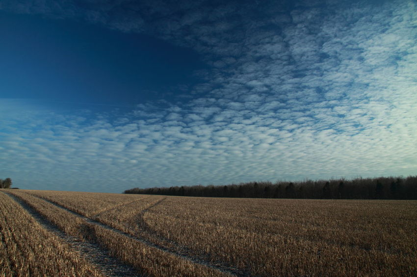 Big Sky over Farmland after Harvest After Harvest Agriculture Beauty In Nature Big Sky Blue Cloud Cloud - Sky Country Countryside Crop  Cultivated Land Day Farm Land Field Harvest Time Horizon Over Land Landscape No People Outdoors Rural Scene Scenics Sky Stubble Field The Cotswolds