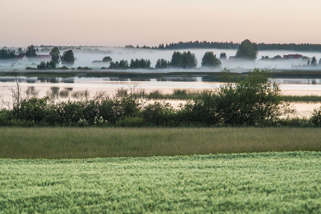 Foggy morning Morning Beauty In Nature Field Fog Foggy Grass Lake Landscape Landscapes Nature No People Outdoors Scenics Sunrise Tranquil Scene Tree Water