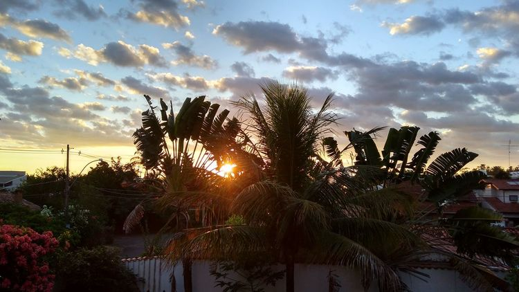 Nature Tree Growth Sunset Sky Beauty In Nature Outdoors Cloud - Sky Sun Plant Flower Sunlight Scenics No People Palm Tree Low Angle View Day Freshness Flower Head