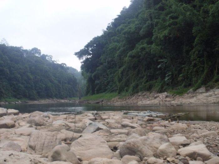 Very early morning at Belum Rainforest. Nature IPSNoFilter EyeEm Malaysia Misty