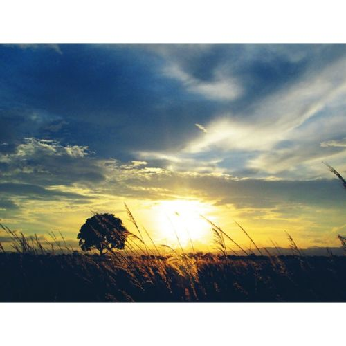 Nature_collection Naturelovers Sunset Silhouettes Skylovers Landscape_photography Peaceful Nirvana!!!
