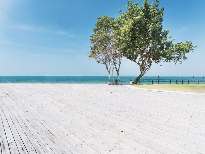 Summer holiday vacation concept, tree at the beach front, blue sea clear sky with panoramic sea view on sunny day Beautiful Holiday Panoramic Sunny Tree Beach Beauty In Nature Coastal Honeymoon Horizon Horizon Over Water Leisure Nature No People Relaxation Scenics - Nature Sea Sky Summer Sunny Day Sunshine Tranquil Scene Tranquility Tropical Vacation