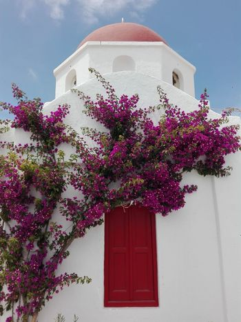 Myconos, Grecia Flower Tree Residential Building History Façade Door House Business Finance And Industry Entrance Architecture
