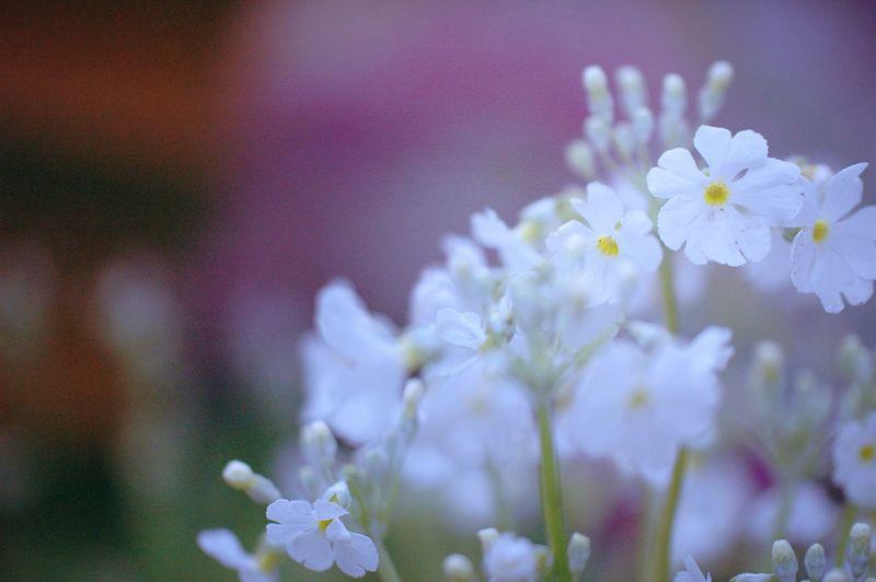 Colors 春 Spring Spring Colours EyeEm Nature Lover Spring Time Bokeh Flowers Flower Collection EyeEm Flower