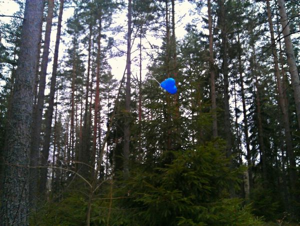 One's I actually DID SEE A BLUE HEART hanging in a tree!!! Talk about surprise... I was lucky to see it!!! ♡♡♡ Beautiful Blue Blue Love Blue Heart Love <3 All Things Heartshaped Light It Up Blue In The Forest Happy :) Luckyme A Sign