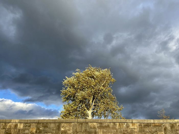 Low angle view of tree against storm clouds