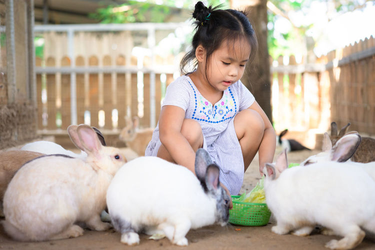 Cute girl feeding rabbits