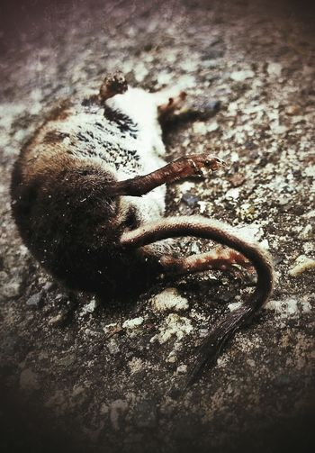 """I won't be the last. I won't be the first. Find a way to where the sky meets the earth. It's all right and all wrong. For me it begins at the end of the road. We come and go."" (Eddie Vedder) NEM BadKarma Beauty Of Decay Urban Nature Mouse"