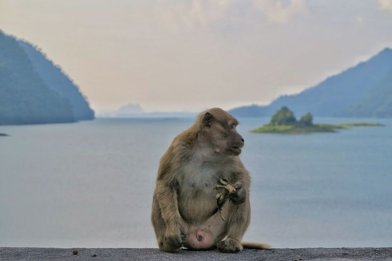 Money sitting in front of the dam.One Animal Animal Wildlife Animal Mammal Animals In The Wild No People Water Close-up Nature Day Sky Dam E Beautifulinnature Naturalbeauty Photography Landscape Water Kanchanaburi Thailand Rock Dam Valley Scenic View Background Animal Themes Nature Monkey Sitting Alone Khao Lam Kanjanaburi, Thailand
