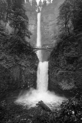 Benson bridge and multnomah falls in forest