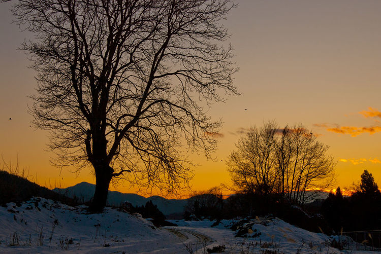 Sunset Sky Winter Bare Tree Scenics - Nature Tree Beauty In Nature Cold Temperature Tranquility Snow Tranquil Scene Orange Color No People Plant Nature Silhouette Environment Landscape Branch Outdoors Sunset Colors Japan Japan Photography Tree Pentax