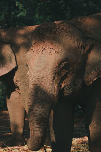 Close-up of elephant standing in forest