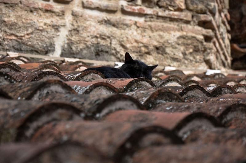Stray Cat Sleeping Outdoors